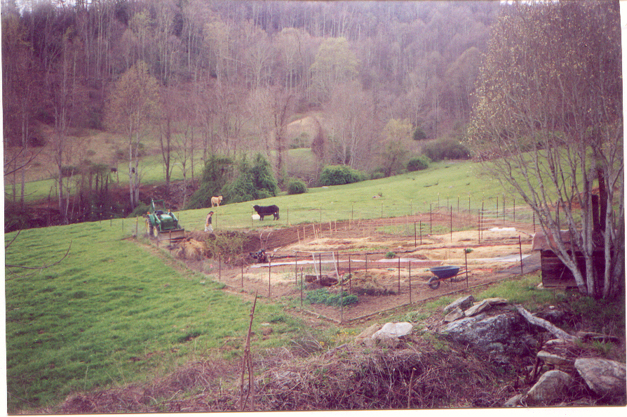 Distant view of person in garden plot and cattle grazing nearby
