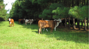 Cover photo for Are You a Landowner Interested in Working With Beginning Meat Producers?  We Need You!
