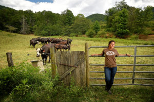 tudent and cattle at farm in Buncombe County