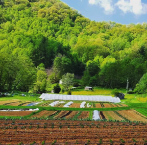 Cover photo for Developed Market Garden in Yancey County Ready for Experienced Operator
